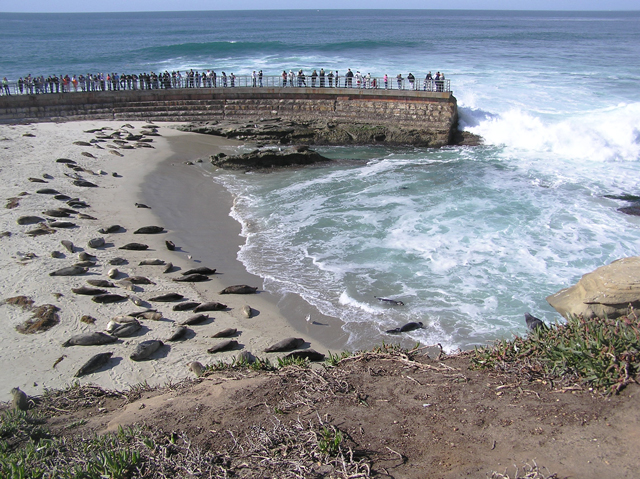 Harbor_Seals_La_Jolla_Casa-Pool