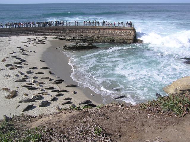 Harbor_Seals_La_Jolla_Casa-Pool